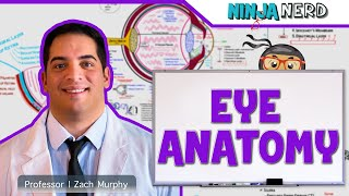 Special Senses   Eye Anatomy