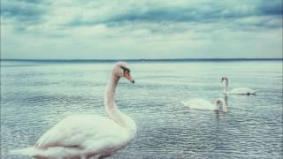 ピョートル・チャイコフスキー作曲「白鳥の湖」から「4羽の白鳥たちの踊...