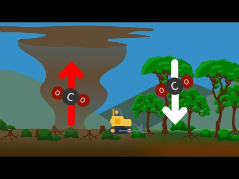 Carbon: The Ecosystems View