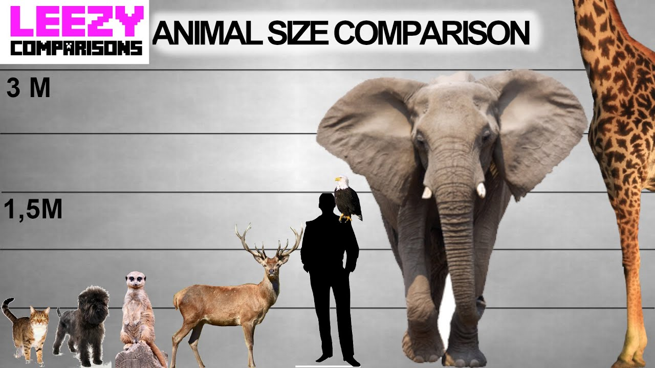 Animal Size Comparison