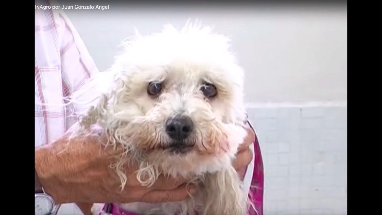 Bulto duro en el cuello de mi perro