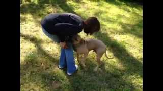 Charlie Is A Dog For Adoption: Neutered Male Rescue Dog, Vaccinated, Pet Id, Obedience Train