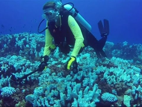 Dying Coral May Threaten Island Population