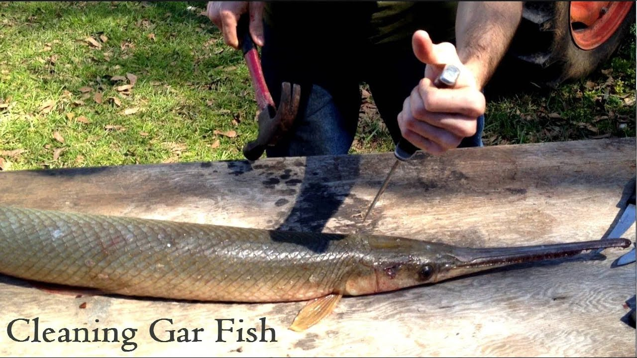 Cleaning gar fish youtube for Cleanest fish to eat