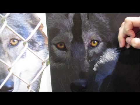 Painting a Gray Wolf in acrylics