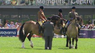 Cobiau Cymreig Meirch tan Gyfrwy | Welsh Cob ridden Stallions
