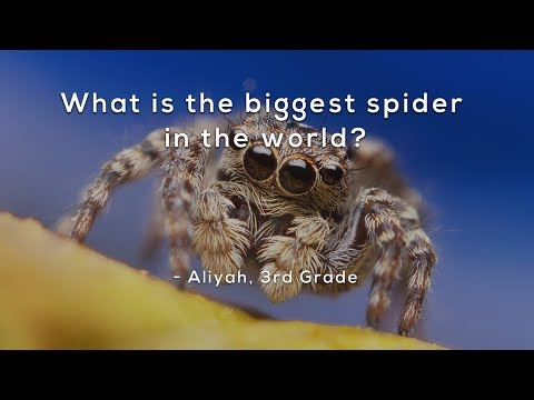 What is the biggest spider in the world?