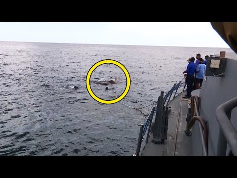 Rettungsaktion mitten im Meer - Du wirst nicht glauben, um welches Tier es sich handelt.