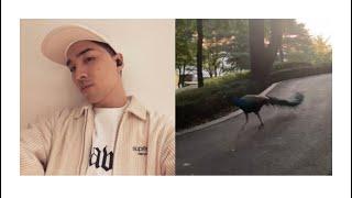 빅뱅 태양 영배님이 찍어준 영상입니다 peacock