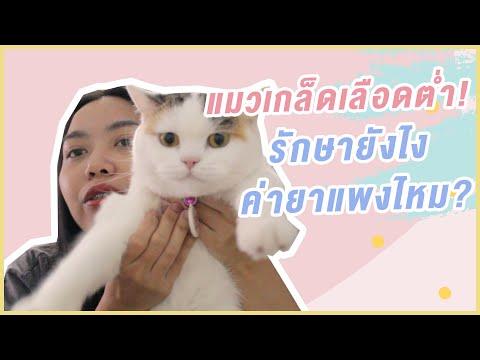แชร์ประสบการณ์แมวเกล็ดเลือดต่ำ! รักษายังไง ค่ายาแพงไหม? ต้องดู