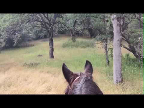 052316 horseback ride