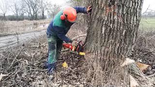 Wycinka drzew: Topola ok.3.50m obwód
