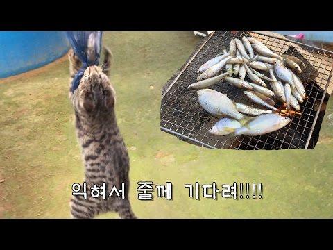 고양이의 잡어 먹방