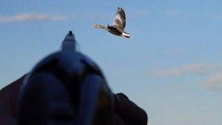 Ducks Hunting - Chasse De Canard -Doublé de canard  2016