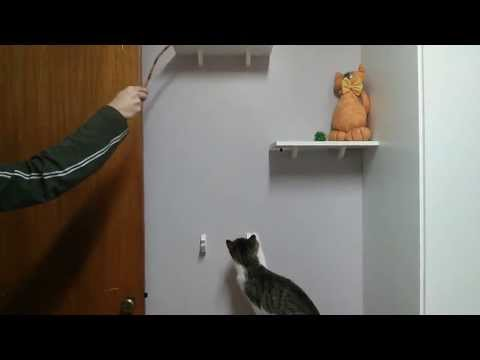 Cat's are really smart?