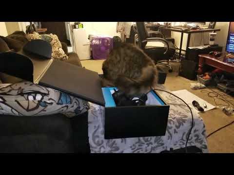 Cat will be cat