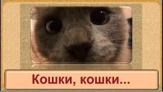 Клип на песню Кошки, кошки.