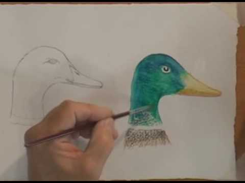 How To Use Watercolor Pencils -Part 2 - YouTube