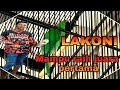 Cucak Ijo Lakoni Mampu Meraih Juara Pertama Di Latpres Gantangan Aubry  Mp3 - Mp4 Download