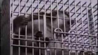 Tierversuchslabor Covance