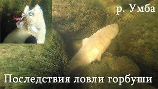 ШОКИРОВАН УВИДЕННЫМ ПОД ВОДОЙ в р. УМБА / SHOCKED by what he saw UNDER WATER