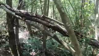 팝콘tv 홍이형 일본 주카이숲 혼자서 촬영~