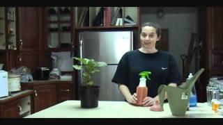 How to Make Organic Homemade Pesticide - Hot Sauce Tea