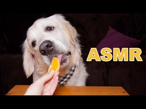 ASMR Dog Reviewing Different Types of Food #4