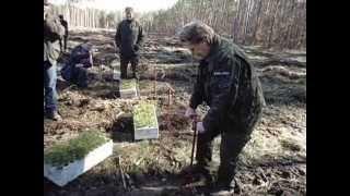 Sadzenie lasu- instrukcja obsługi