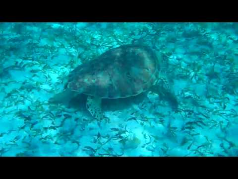 Hol Chan Marine Reserve-  Ambergris Caye, Belize