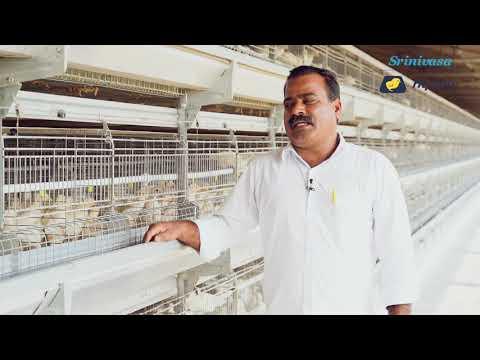 Srinivasa & Hy-Line W-80 Commercial Layer Bird