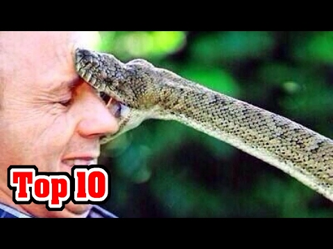 Top 10 DEADLIEST Snakes NOT To Mess With!