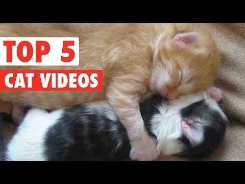 Top 5 Amazing Cats Compilation || March 25 2016