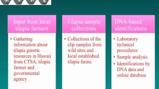 DNA-Based Identifications of Tilapia in Hawaii: Final Report