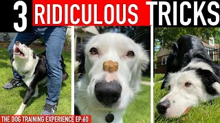 How to Train 3 RIDICULOUS Dog Tricks FAST!
