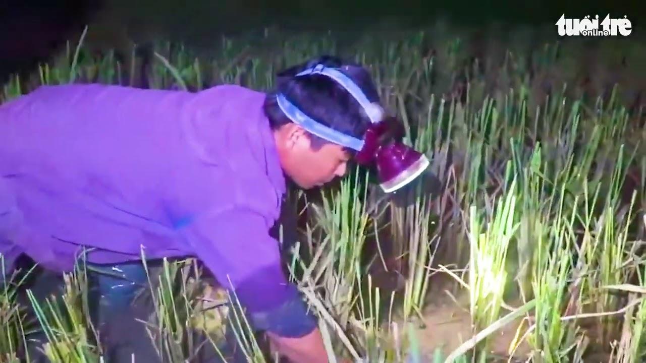 Nghề săn ếch đêm