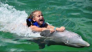 Дельфины - море позитива!