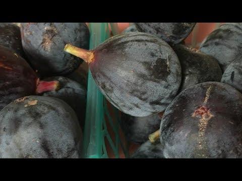 RAW VEGAN:  Ripe Black Mission Figs (FIG FANATIC HEAVEN)!