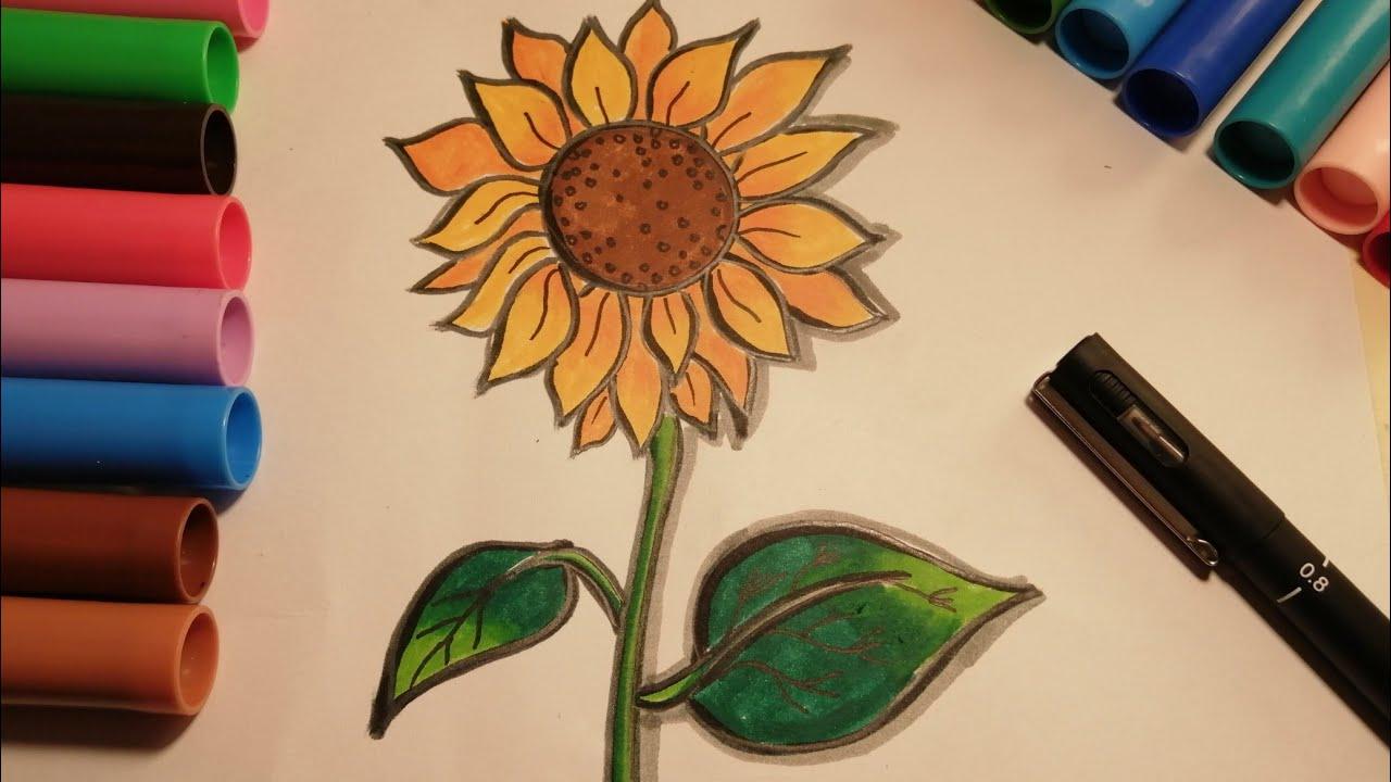 تعلم طريقة رسم زهرة دوار الشمس خطوة خطوة Learn How To Draw Sunflower Step By Step Youtube