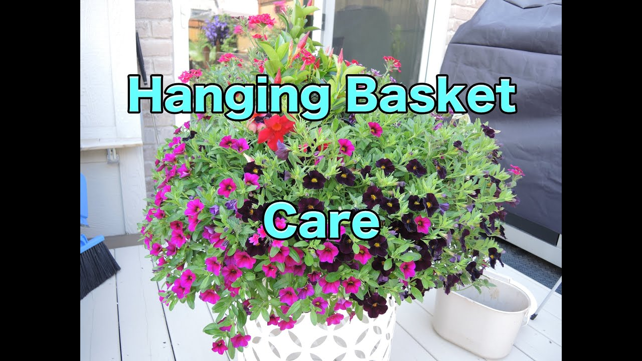 Hanging Basket Care How To Maintain Your Hanging Baskets Pruning