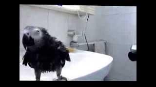 Yako (ducha - dutxa)