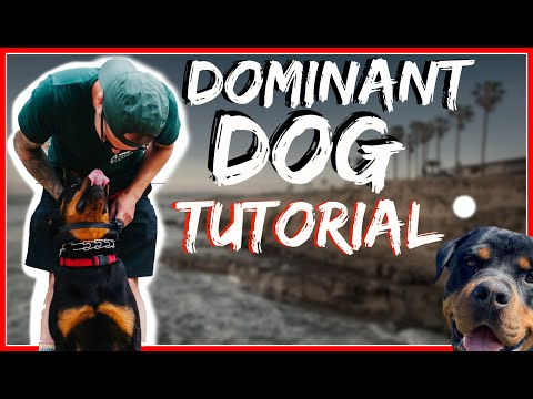 Rottweiler Attacks other dogs - Aggressive Dog Training with Americas Canine Educator Day 2 Part 2