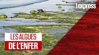 Bretagne : les algues vertes sont de retour