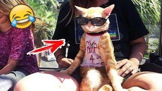 КОШКИ СОБАКИ 2020 ПРИКОЛЫ С КОТАМИ И СОБАКАМИ Смешные Животные Котики и коты 2020 Funny Cats