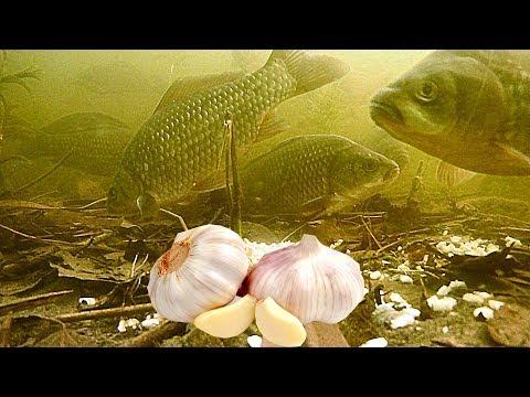 ПЕРЛОВКА С ЧЕСНОКОМ! Реакция рыбы. Подводная съемка