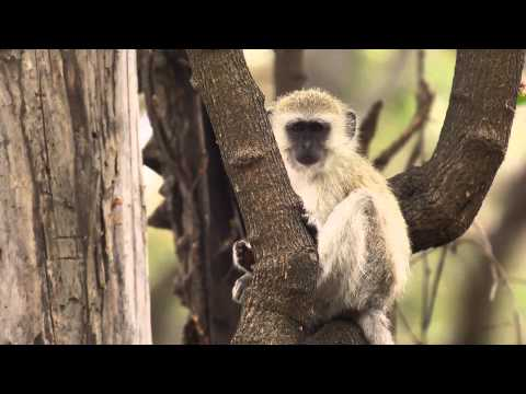 Animal Alarm Calls - Eyes on Africa