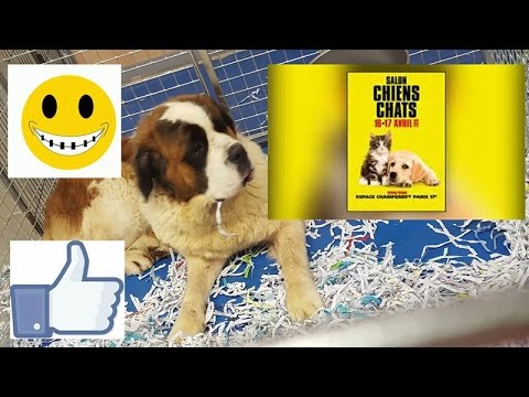 Grand Salon Chien Chat Porte De Champerret 2016 Youtube