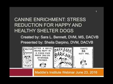 Stress Reduction for Happy and Healthy Shelter Dogs