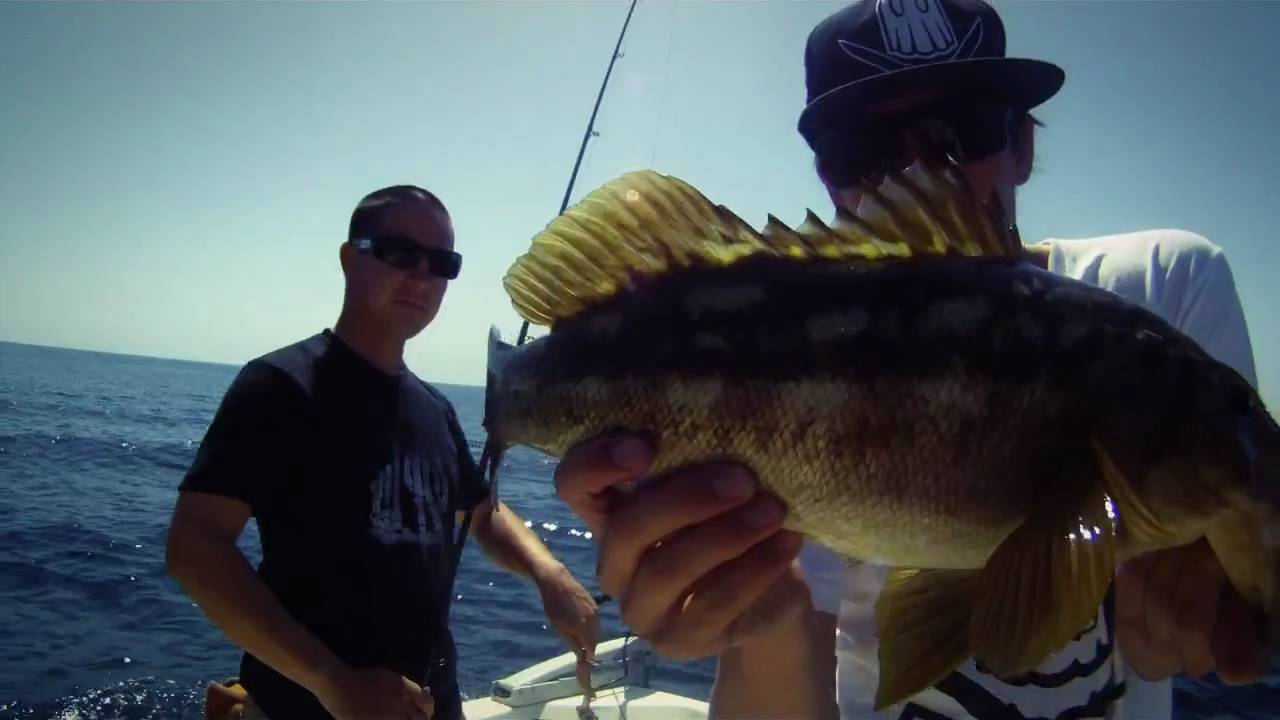 Face down bass up san clemente island calico bass for Calico bass fishing