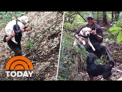 Mark - Firefighter rescues blind dog lost in the woods for 8 days